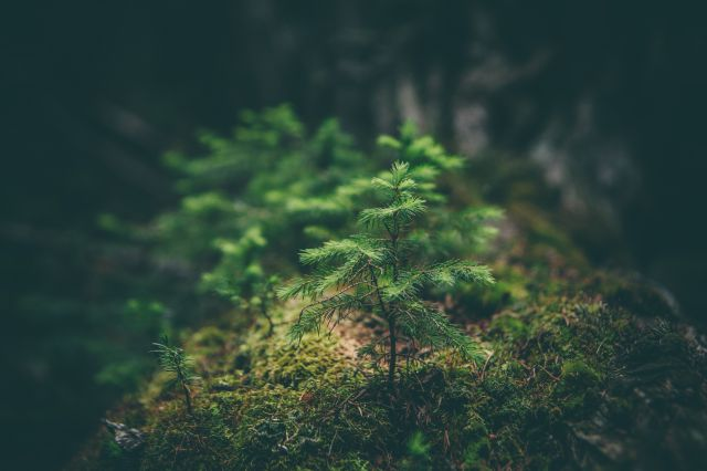 Kleiner Tannenbaum