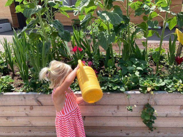 Kind gießt Pflanzen im Kindergarten Pulkau
